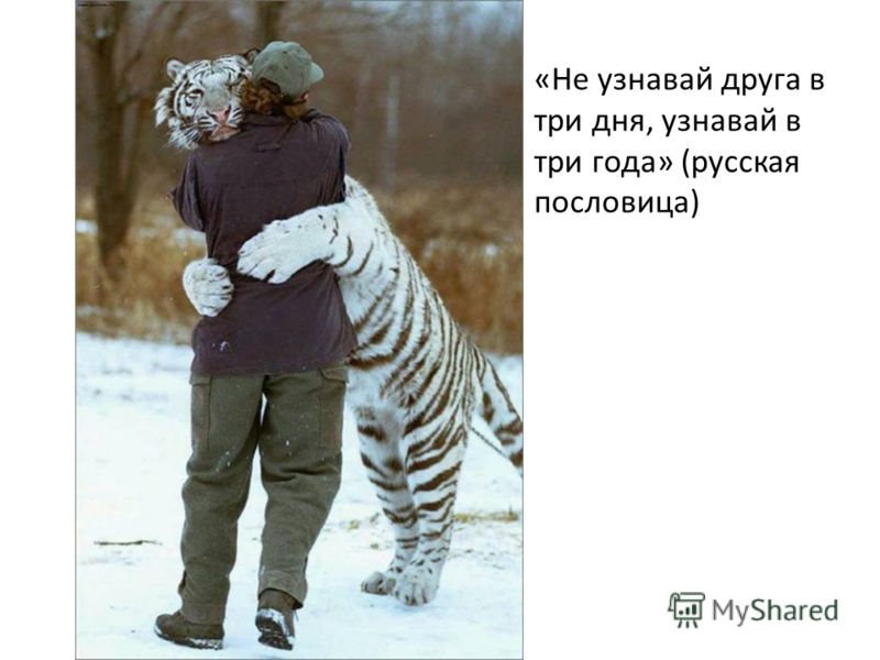 «Не узнавай друга в три дня, узнавай в три года» (русская пословица)