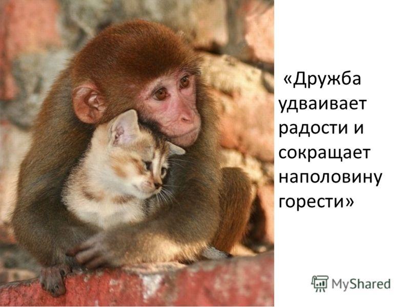 «Дружба удваивает радости и сокращает наполовину горести»