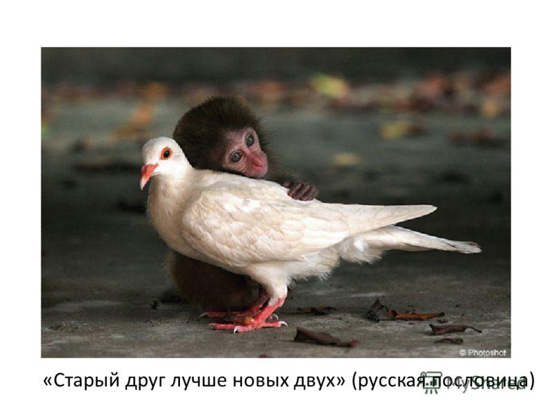 «Старый друг лучше новых двух» (русская пословица)