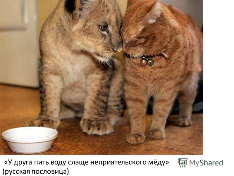 «У друга пить воду слаще неприятельского мёду» (русская пословица)