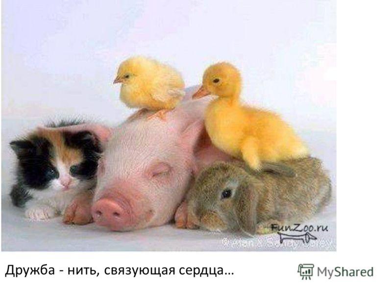 Дружба - нить, связующая сердца…