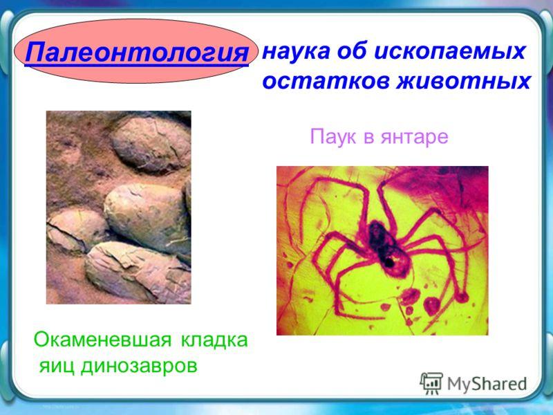 Палеонтология наука об ископаемых остатков животных Паук в янтаре Окаменевшая кладка яиц динозавров