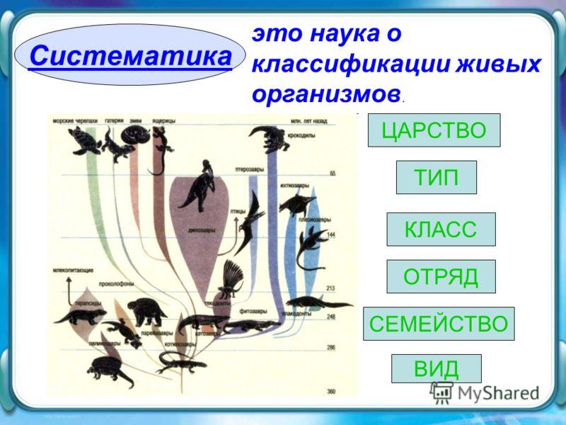 Систематика это наука о классификации живых организмов. ВИД ЦАРСТВО ТИП КЛАСС ОТРЯД СЕМЕЙСТВО