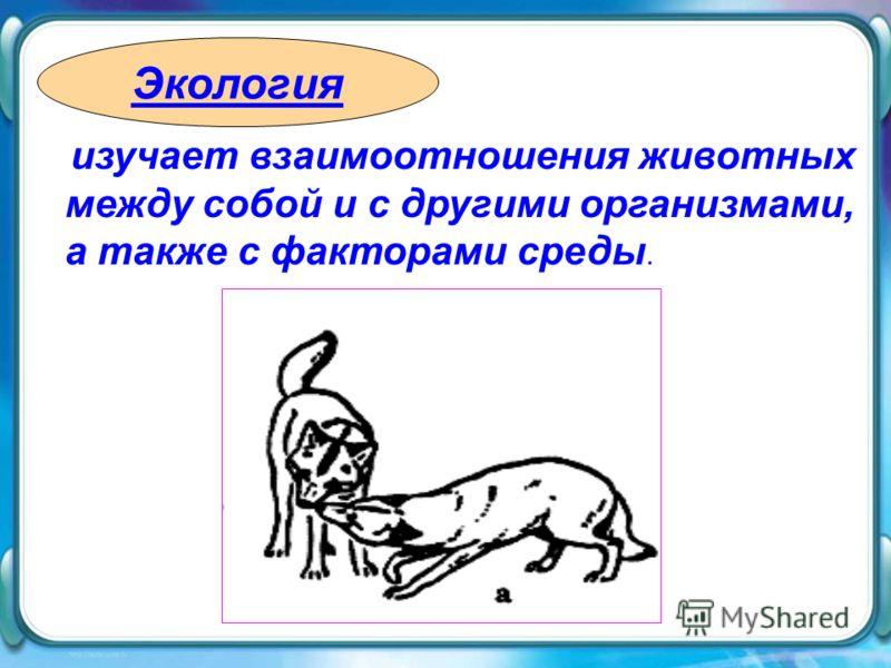 изучает взаимоотношения животных между собой и с другими организмами, а также с факторами среды. Экология