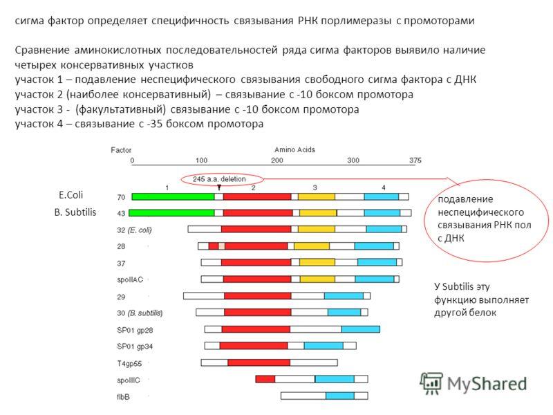 сигма фактор определяет специфичность связывания РНК порлимеразы с промоторами Сравнение аминокислотных последовательностей ряда сигма факторов выявило наличие четырех консервативных участков участок 1 – подавление неспецифического связывания свободн