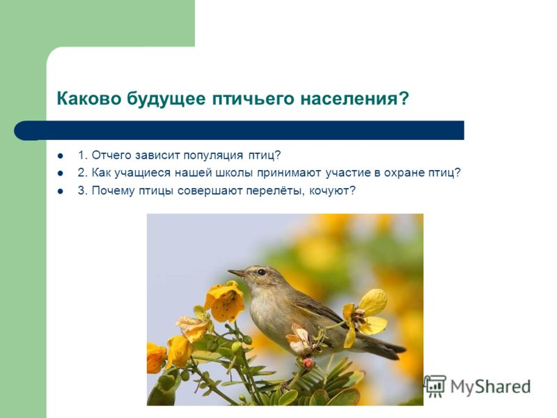 Каково будущее птичьего населения? 1. Отчего зависит популяция птиц? 2. Как учащиеся нашей школы принимают участие в охране птиц? 3. Почему птицы совершают перелёты, кочуют?