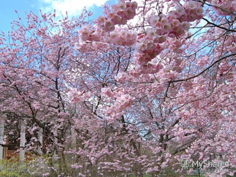 Картинки природы в японской поэзии