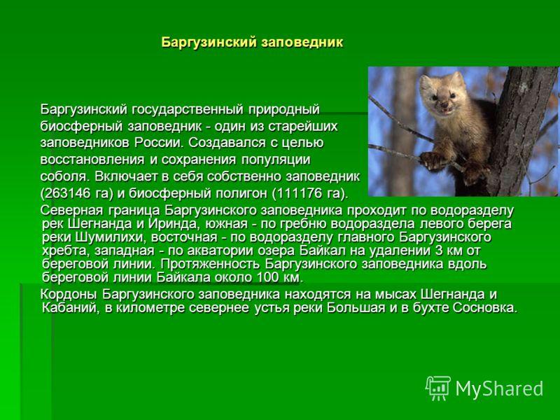 Баргузинский заповедник Баргузинский заповедник Баргузинский государственный природный Баргузинский государственный природный биосферный заповедник - один из старейших биосферный заповедник - один из старейших заповедников России. Создавался с целью