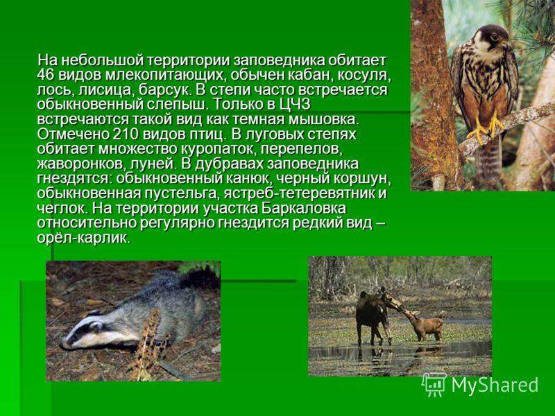 На небольшой территории заповедника обитает 46 видов млекопитающих, обычен кабан, косуля, лось, лисица, барсук. В степи часто встречается обыкновенный слепыш. Только в ЦЧЗ встречаются такой вид как темная мышовка. Отмечено 210 видов птиц. В луговых с