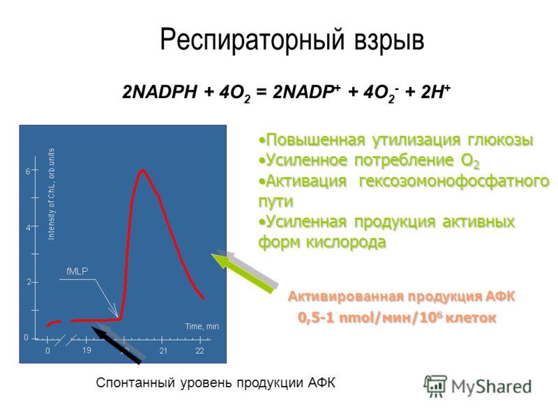Респираторный взрыв 2NADPH + 4O 2 = 2NADP + + 4O 2 - + 2H + 0,5-1 nmol/мин/10 6 клеток Повышенная утилизация глюкозыПовышенная утилизация глюкозы Усиленное потребление О 2Усиленное потребление О 2 Активация гексозомонофосфатного путиАктивация гексозо
