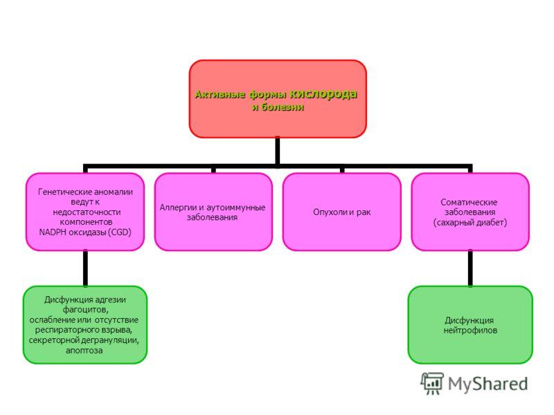 Активные формы кислорода и болезни Генетические аномалии ведут к недостаточности компонентов NADPH оксидазы (CGD) Дисфункция адгезии фагоцитов, ослабление или отсутствие респираторного взрыва, секреторной дегрануляции, апоптоза Аллергии и аутоиммунны