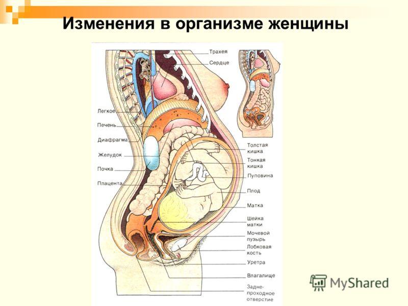 Изменения в организме женщины