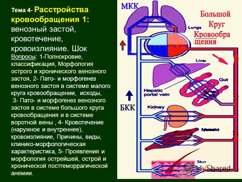 Тема 4- Расстройства кровообращения 1: венозный застой, кровотечение, кровоизлияние. Шок Вопросы: 1-Полнокровие, классификация, Морфология острого и хронического венозного застоя, 2- Пато- и морфогенез венозного застоя в системе малого круга кровообр
