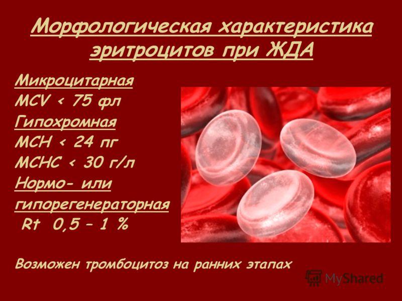 Морфологическая характеристика эритроцитов при ЖДА Микроцитарная MCV < 75 фл Гипохромная MCH < 24 пг MCHC < 30 г/л Нормо- или гипорегенераторная Rt 0,5 – 1 % Возможен тромбоцитоз на ранних этапах