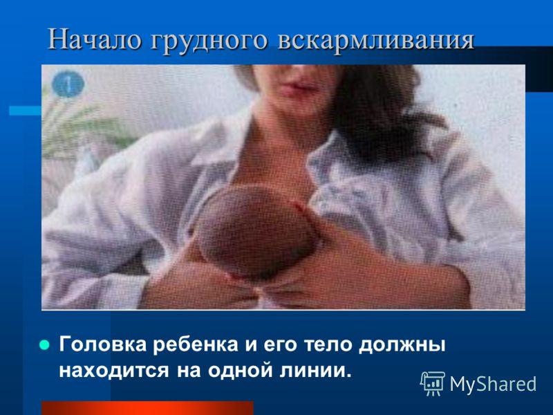 Начало грудного вскармливания Головка ребенка и его тело должны находится на одной линии.