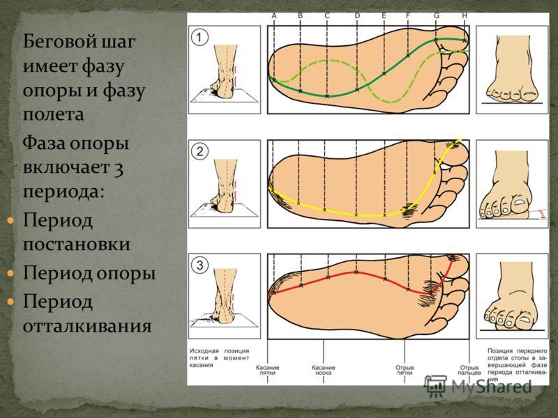Насильственно формируют своды стопы, возвращая стопе амортизирующие свойства Устраняют вальгусное отклонение стопы (кнаружи) Приближают биомеханику стопы к оптимальной