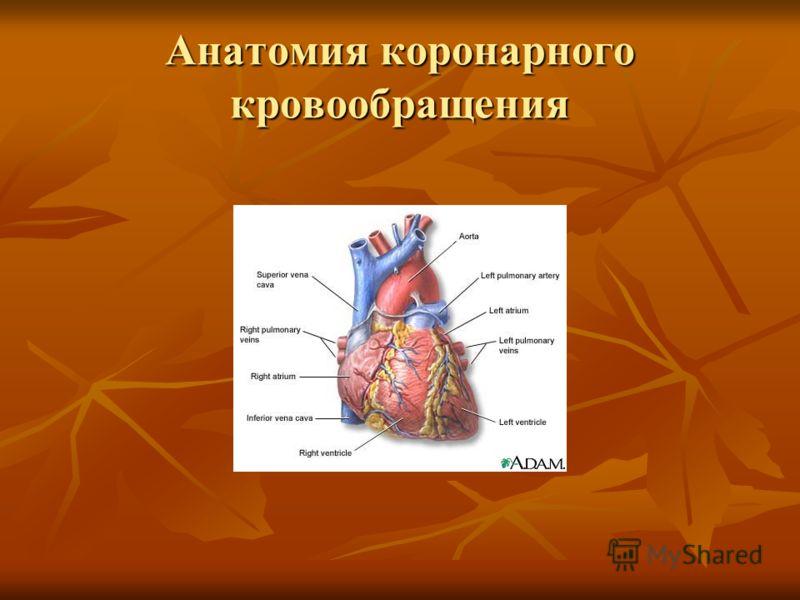 Анатомия коронарного кровообращения