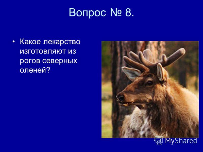 Вопрос 8. Какое лекарство изготовляют из рогов северных оленей?