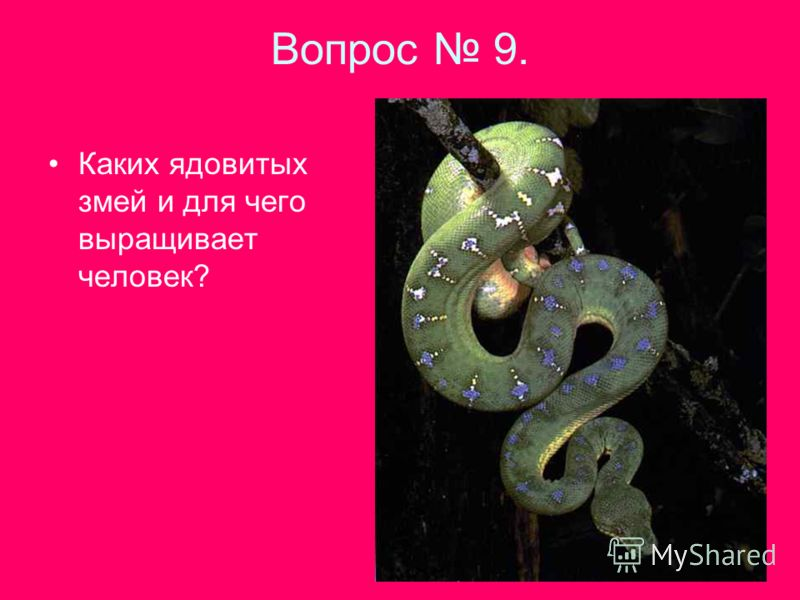 Вопрос 9. Каких ядовитых змей и для чего выращивает человек?