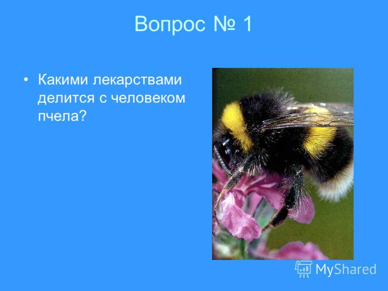 Вопрос 1 Какими лекарствами делится с человеком пчела?