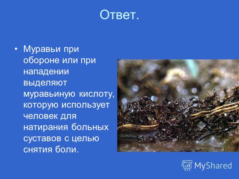 Ответ. Муравьи при обороне или при нападении выделяют муравьиную кислоту, которую использует человек для натирания больных суставов с целью снятия боли.