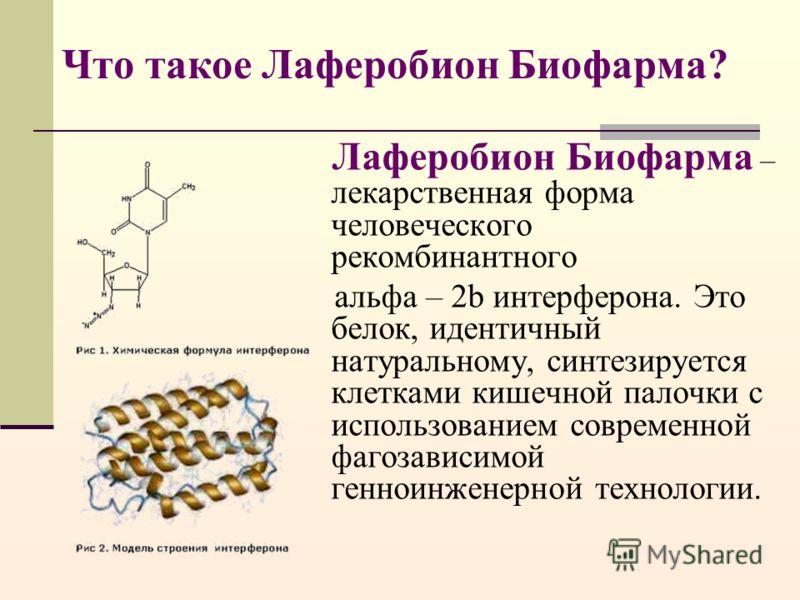 Что такое Лаферобион Биофарма? Лаферобион Биофарма – лекарственная форма человеческого рекомбинантного альфа – 2b интерферона. Это белок, идентичный натуральному, синтезируется клетками кишечной палочки с использованием современной фагозависимой генн