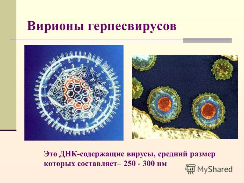 Вирионы герпесвирусов Это ДНК-содержащие вирусы, средний размер которых составляет– 250 - 300 нм