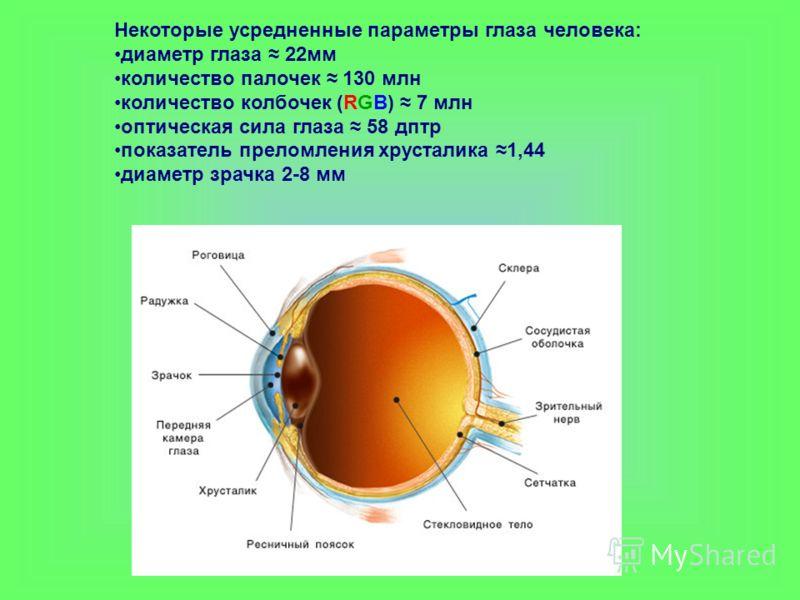 Некоторые усредненные параметры глаза человека: диаметр глаза 22мм количество палочек 130 млн количество колбочек (RGB) 7 млн оптическая сила глаза 58 дптр показатель преломления хрусталика 1,44 диаметр зрачка 2-8 мм