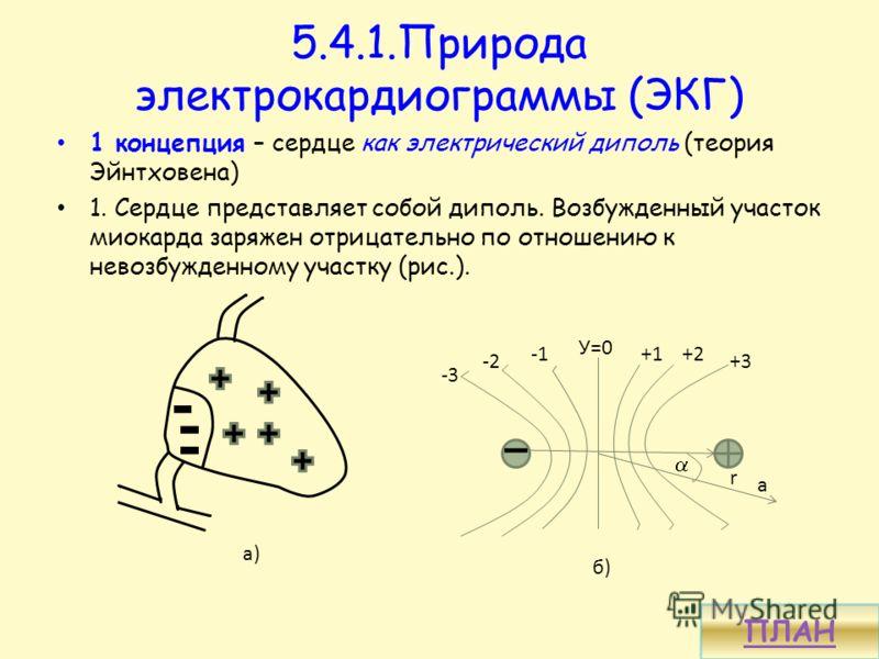5.4.1.Природа электрокардиограммы (ЭКГ) 1 концепция – сердце как электрический диполь (теория Эйнтховена) 1. Сердце представляет собой диполь. Возбужденный участок миокарда заряжен отрицательно по отношению к невозбужденному участку (рис.). а) б) а -