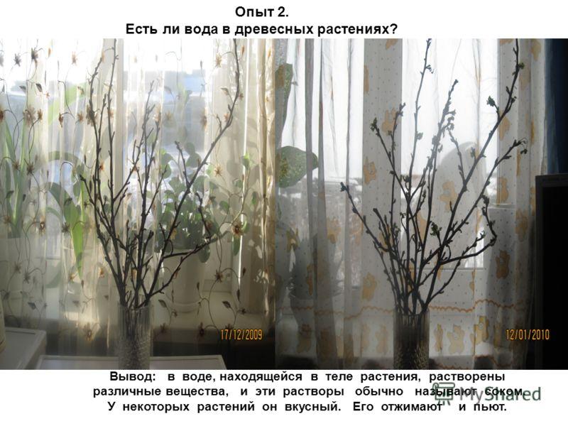 Лёд Опыт 2. Есть ли вода в древесных растениях? Вывод: в воде, находящейся в теле растения, растворены различные вещества, и эти растворы обычно называют соком. У некоторых растений он вкусный. Его отжимают и пьют.
