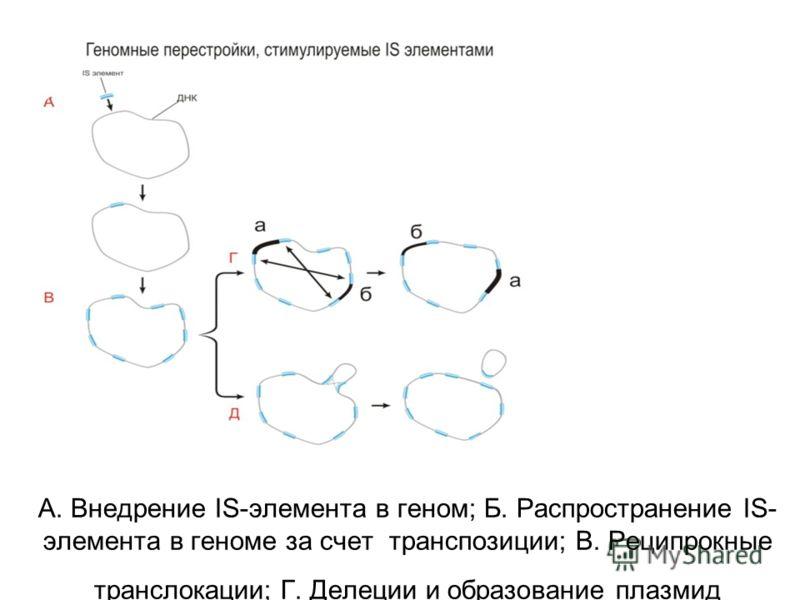 А. Внедрение IS-элемента в геном; Б. Распространение IS- элемента в геноме за счет транспозиции; В. Реципрокные транслокации; Г. Делеции и образование плазмид