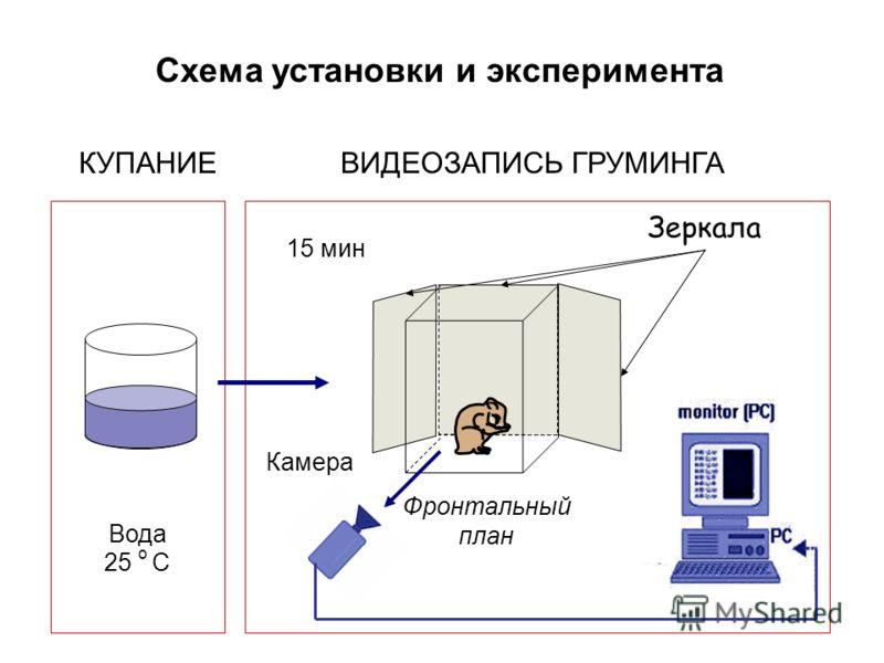 КУПАНИЕ Зеркала Вода 25 o C 15 мин Схема установки и эксперимента Камера ВИДЕОЗАПИСЬ ГРУМИНГА Фронтальный план