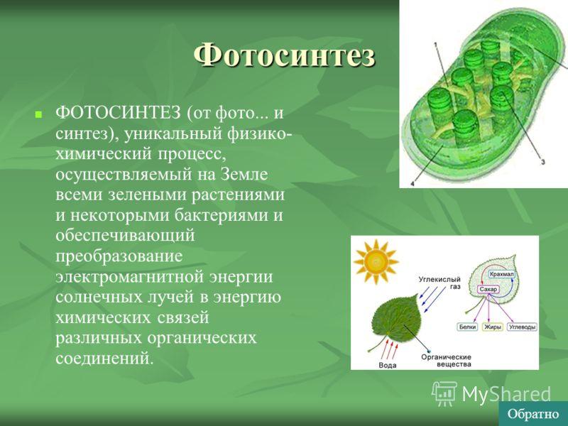 Фотосинтез ФОТОСИНТЕЗ (от фото... и синтез), уникальный физико- химический процесс, осуществляемый на Земле всеми зелеными растениями и некоторыми бактериями и обеспечивающий преобразование электромагнитной энергии солнечных лучей в энергию химически