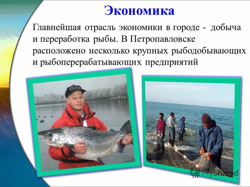 Главнейшая отрасль экономики в городе - добыча и переработка рыбы. В Петропавловске расположено несколько крупных рыбодобывающих и рыбоперерабатывающих предприятий Экономика