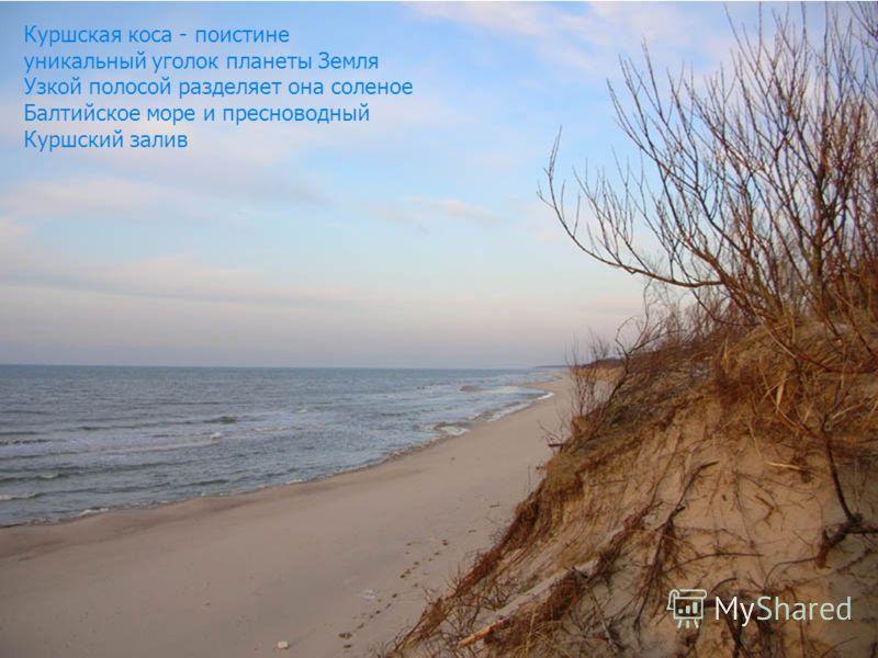 В 1987 году именно здесь был образован, в числе первых в России, Национальный парк «Куршская коса»