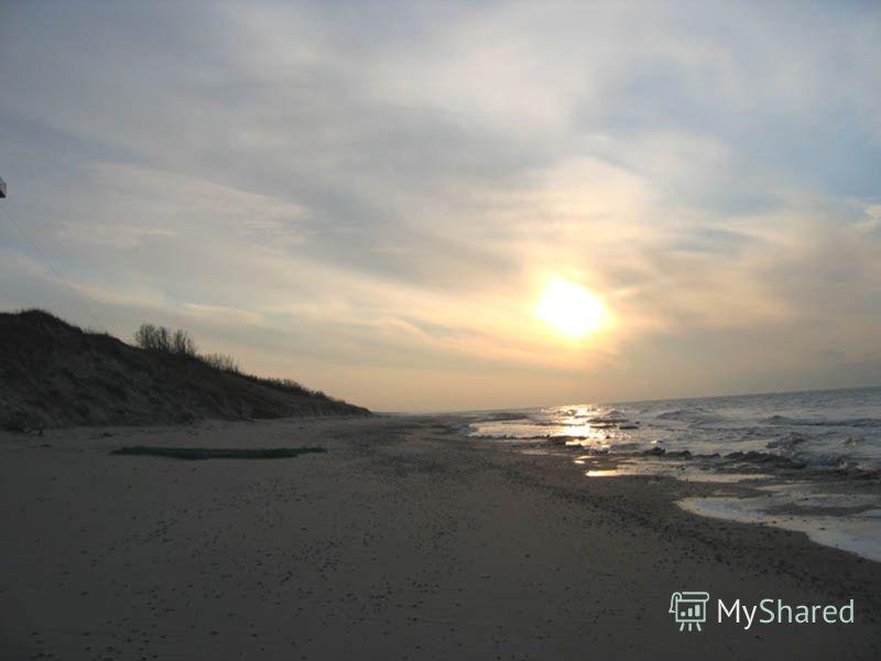 Куршская коса - это песчаный полуостров длиной 98 км (российская часть - 48 км), шириной от 400 м до 4 км