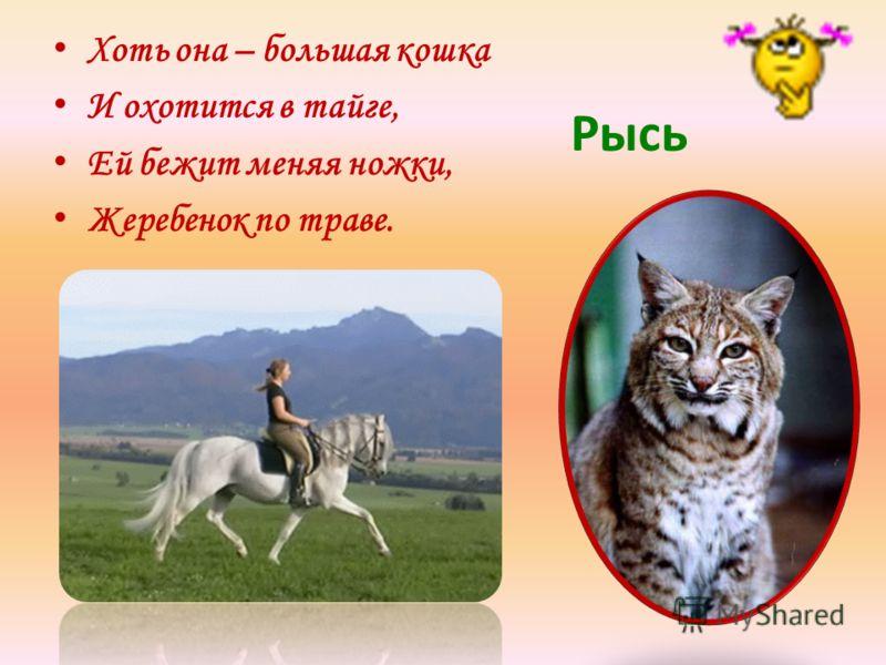 Хоть она – большая кошка И охотится в тайге, Ей бежит меняя ножки, Жеребенок по траве. Рысь