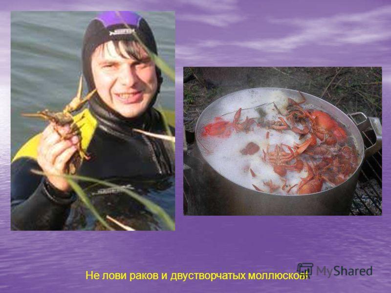 Не лови раков и двустворчатых моллюсков!