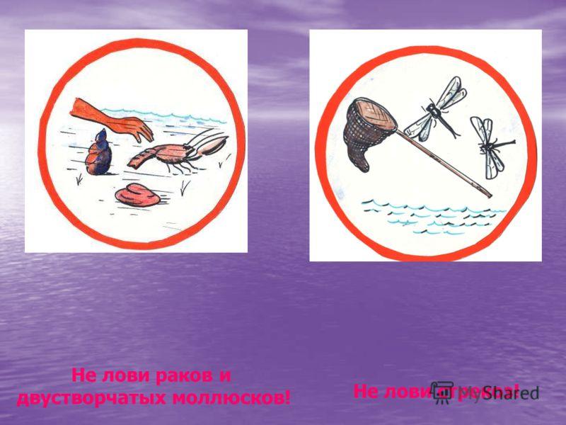 Не лови раков и двустворчатых моллюсков! Не лови стрекоз! Не лови раков и двустворчатых моллюсков! Не лови стрекоз!