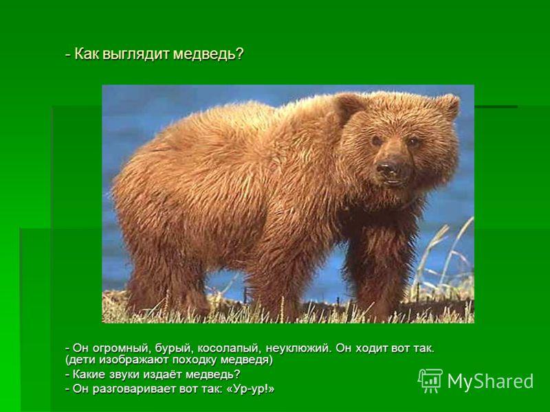 - Как выглядит медведь? - Он огромный, бурый, косолапый, неуклюжий. Он ходит вот так. (дети изображают походку медведя) - Какие звуки издаёт медведь? - Он разговаривает вот так: «Ур-ур!»