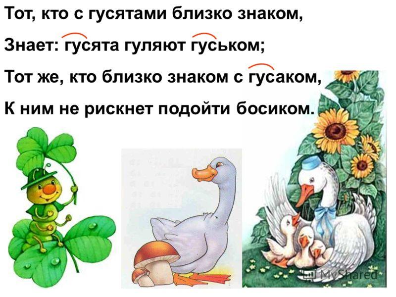 Тот, кто с гусятами близко знаком, Знает: гусята гуляют гуськом; Тот же, кто близко знаком с гусаком, К ним не рискнет подойти босиком.