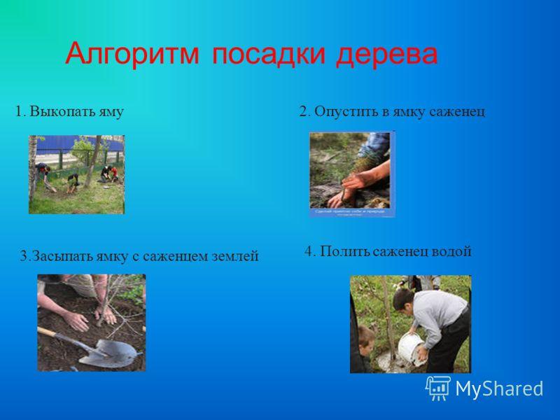 Алгоритм посадки дерева 1. Выкопать яму 2. Опустить в ямку саженец 3.Засыпать ямку с саженцем землей 4. Полить саженец водой