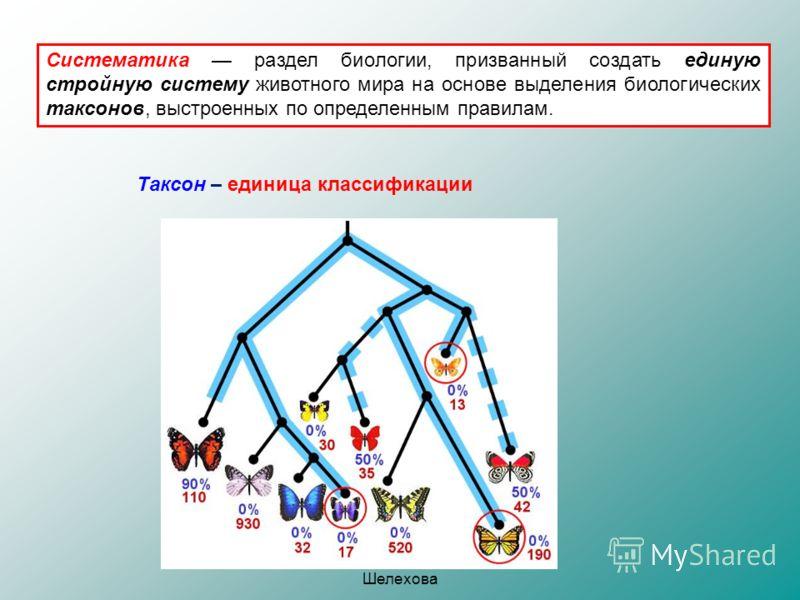 Шулепова Т.В., МОУ СОШ 2 г. Шелехова Систематика раздел биологии, призванный создать единую стройную систему животного мира на основе выделения биологических таксонов, выстроенных по определенным правилам. Таксон – единица классификации