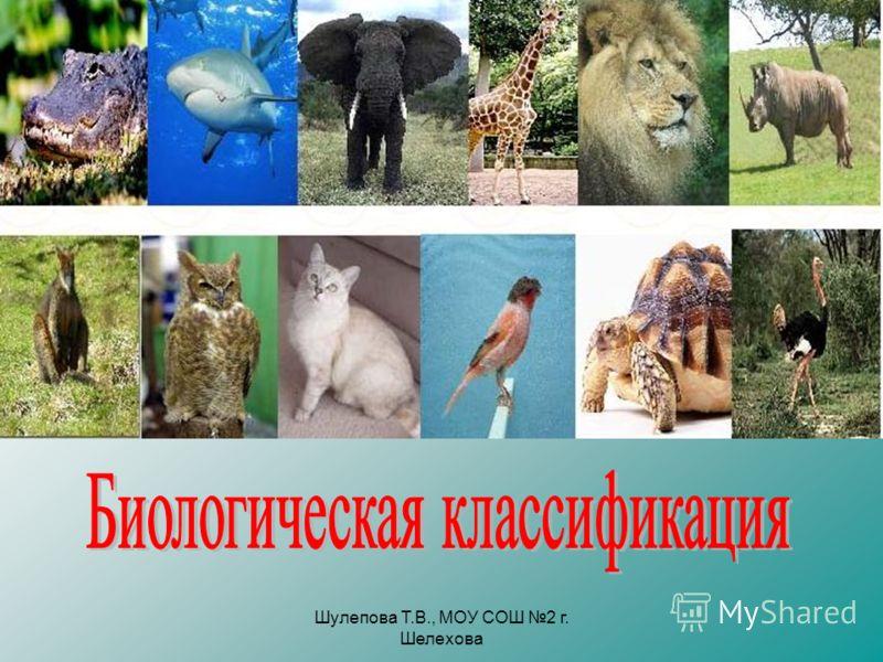 Шулепова Т.В., МОУ СОШ 2 г. Шелехова