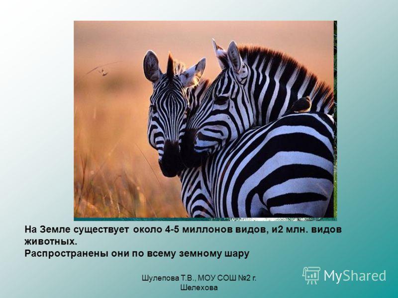 Шулепова Т.В., МОУ СОШ 2 г. Шелехова На Земле существует около 4-5 миллонов видов, и2 млн. видов животных. Распространены они по всему земному шару