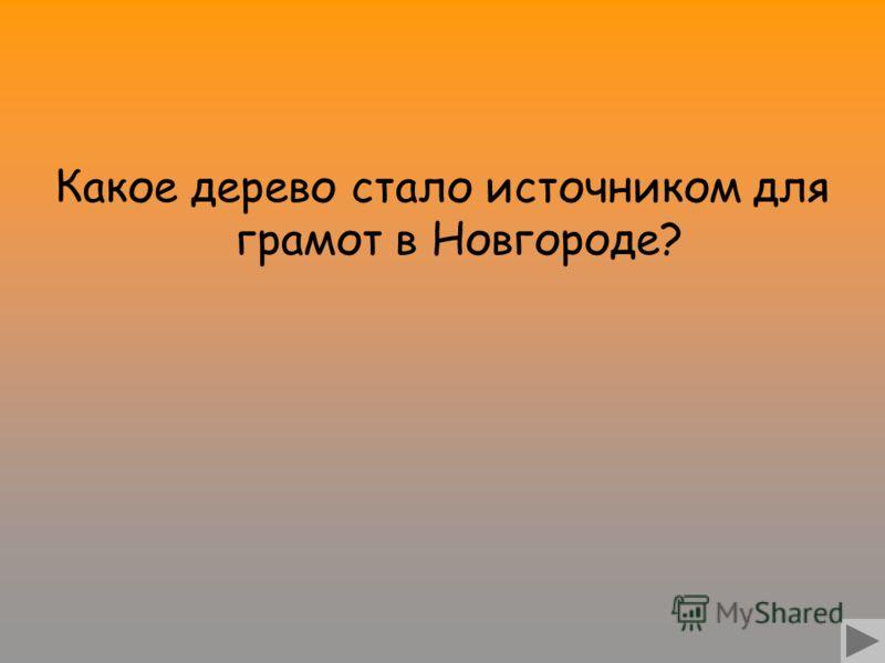 Какое дерево стало источником для грамот в Новгороде?