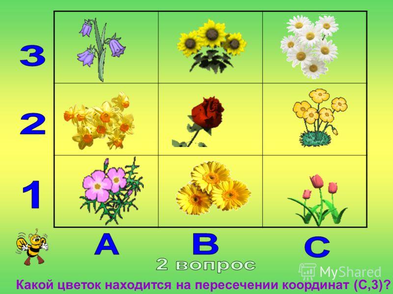 Какой цветок находится на пересечении координат (С,3)?
