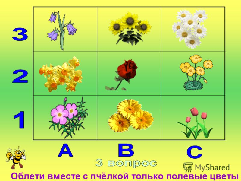 Облети вместе с пчёлкой только полевые цветы