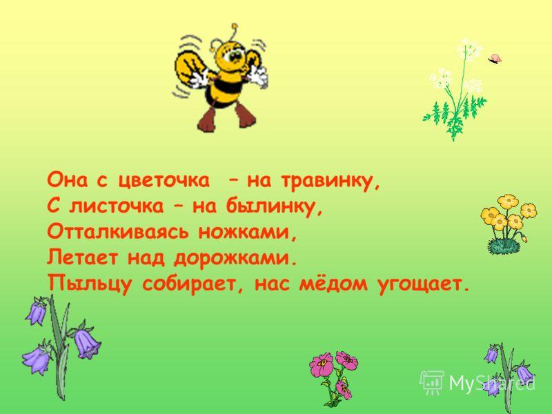 Она с цветочка – на травинку, С листочка – на былинку, Отталкиваясь ножками, Летает над дорожками. Пыльцу собирает, нас мёдом угощает.