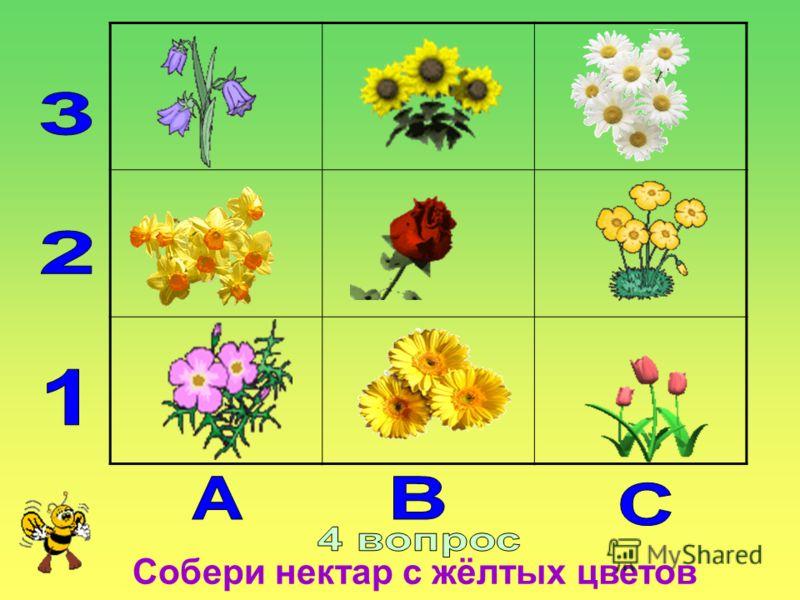 Собери нектар с жёлтых цветов